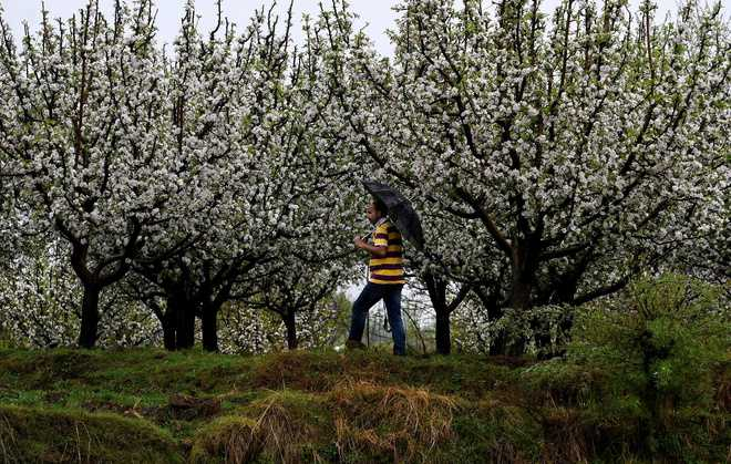 Survey of damaged apple orchards sought in Valley