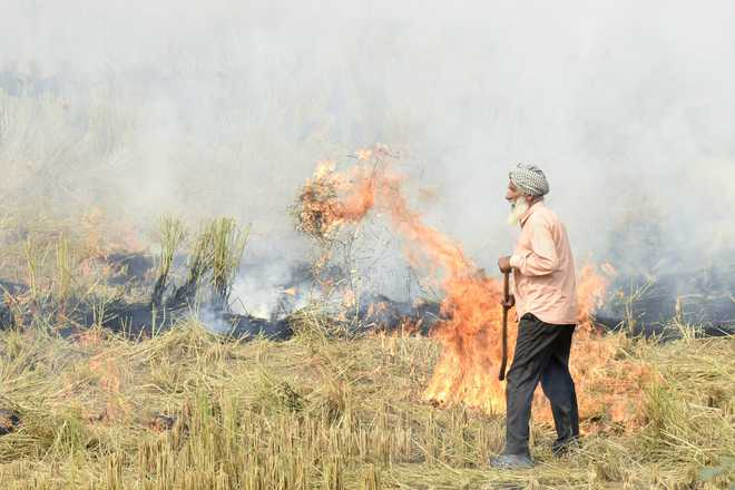29,000 Punjab farmers who did not burn crop residue compensated