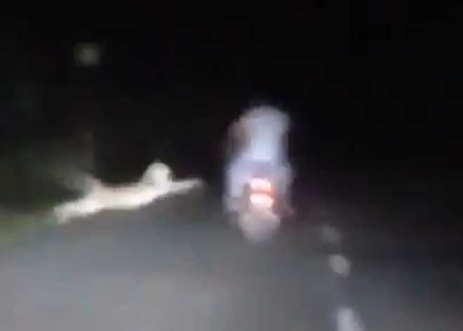 2 motorcycle-borne men barely escape leopard''s clutches: Watch how