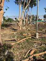 Illegal cutting of trees at Urban Estate leaves residents fuming
