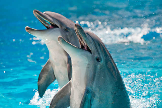 Tiny plastic particles found in dolphins, whales: UK study