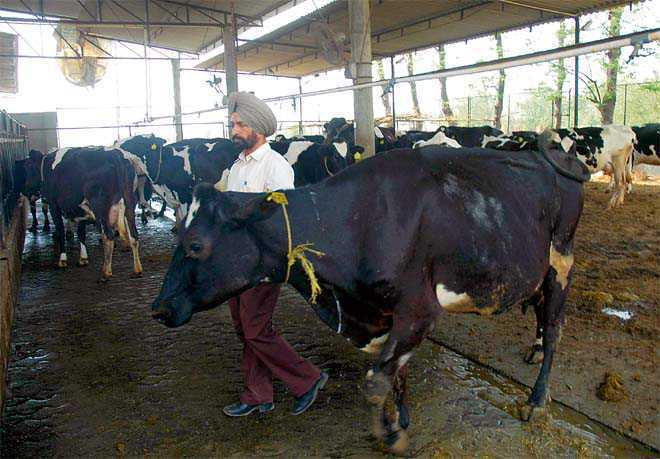 State reports 6 cases of foot and mouth disease