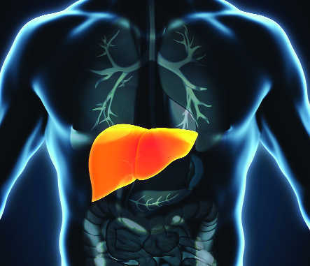 'Lab-grown liver' raises hopes for acute liver failure patients