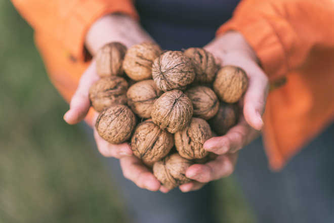 Eating walnuts may lower depression risk: Study