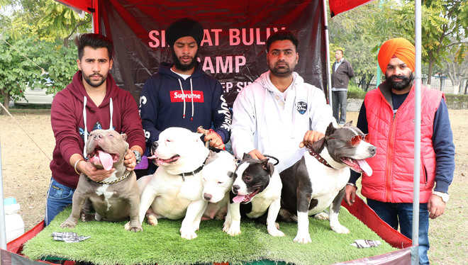 15 canines take part in dog show
