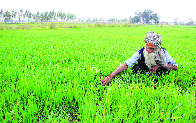 Banks pushing farmers towards arhtiyas