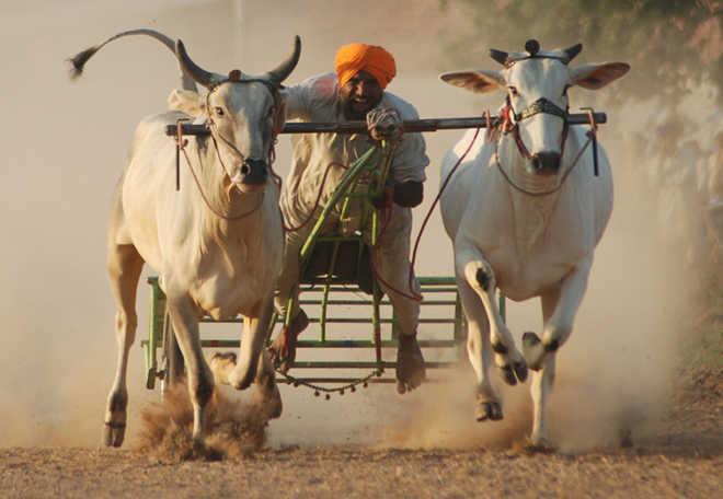 Punjab Bill backs bullock cart race