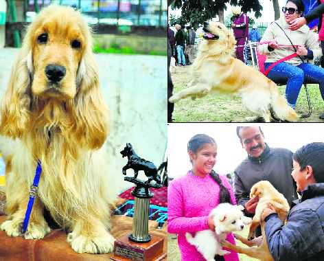 All-breed c'ship sees footfall of 264 bow-wows