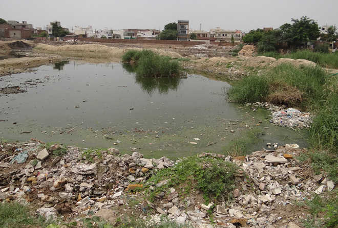 Now, MCB to beautify DAV pond at Rs 2.09 cr