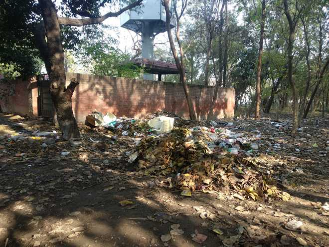 Sec 42 forest area turns dumping site