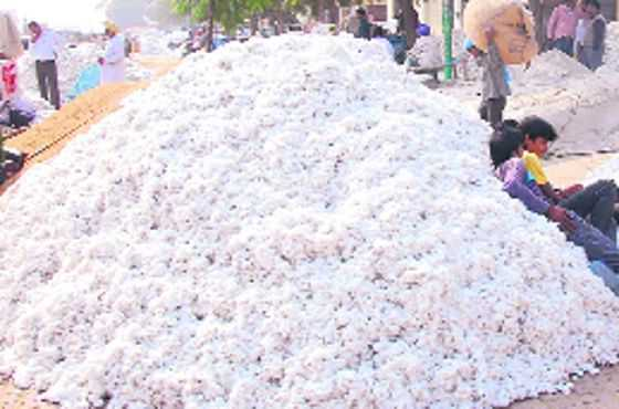 Move to bring 3L hectares under cotton cultivation