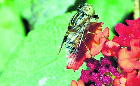 Nauni varsity's apiculture centre 'best' in country