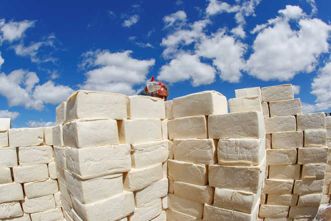 Artist builds wall of cheese on US-Mexico border