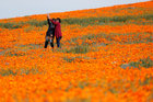 Visitors take a selfie at the Antelope Valley California Poppy Reserve in Lancaster, California, US, March 26, 2019. — Reuters