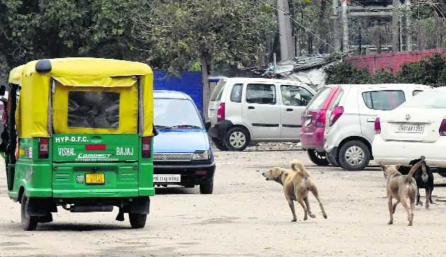 Give teeth to laws to control stray dog menace