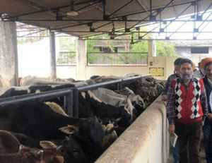Mohali MC fails to prepare report on death of cattle