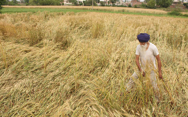 Farmers too suffer crop losses