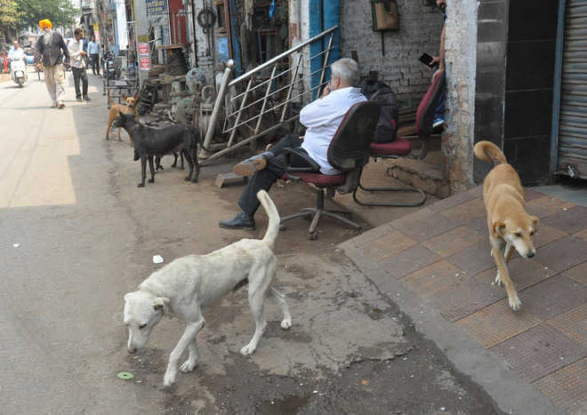 People for concrete action against stray dog menace