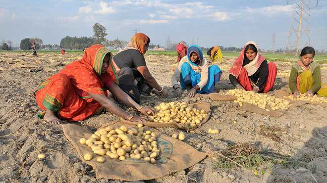 Image result for lays potato farmers issue