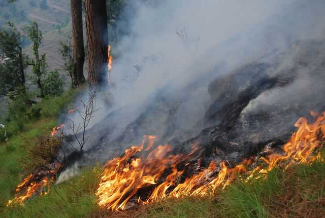Dept braces up to check Kangra forest fires