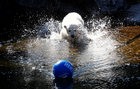The Tierpark Berlin zoo names its female polar bear cub 'Hertha' during a ceremony in Berlin, Germany, April 2, 2019. — Reuters