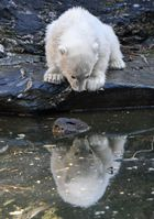 A polar bear cub is photographed at an enclosure at the Tierpark zoo in Berlin on April 1, 2019. — AFP