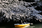 A couple rides a boat underneath cherry blossoms in full bloom in Tokyo, Japan, April 3, 2019. — Reuters