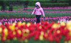 A child walks along a lane amidst tulips in a park in the city of Almaty, Kazakhstan April 16, 2019. — Reuters