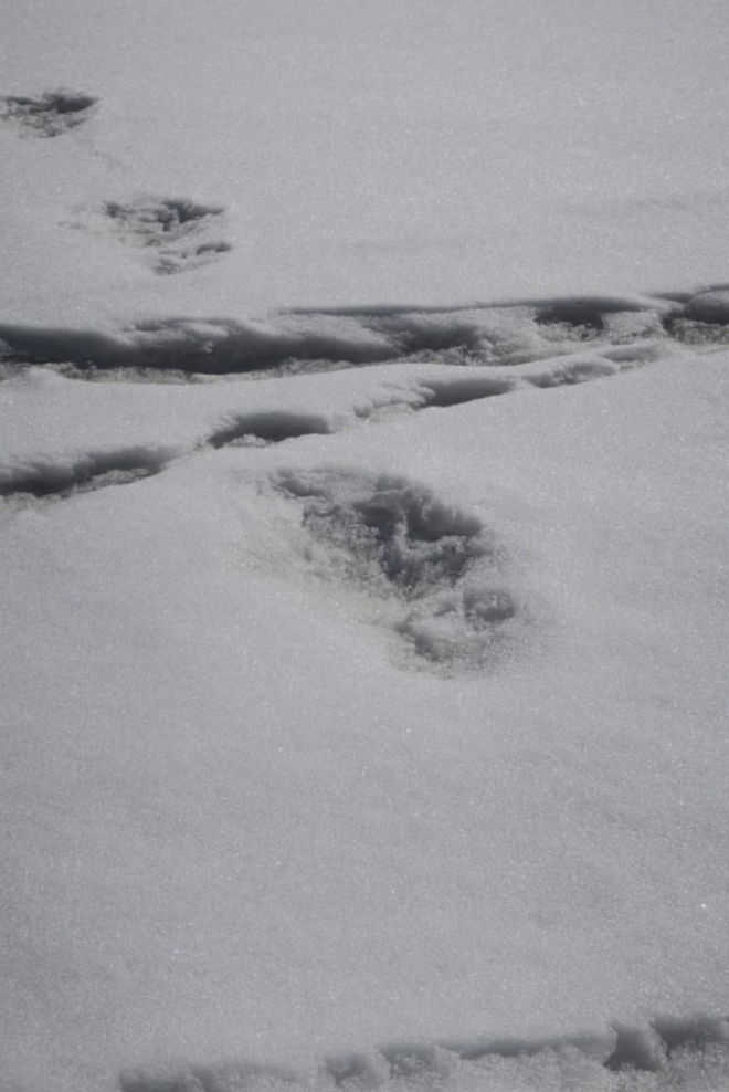 Yeti footprints spotted, says Army