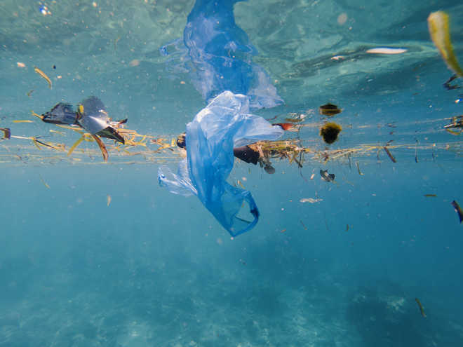 Plastic pollution harming bacteria that help us breathe