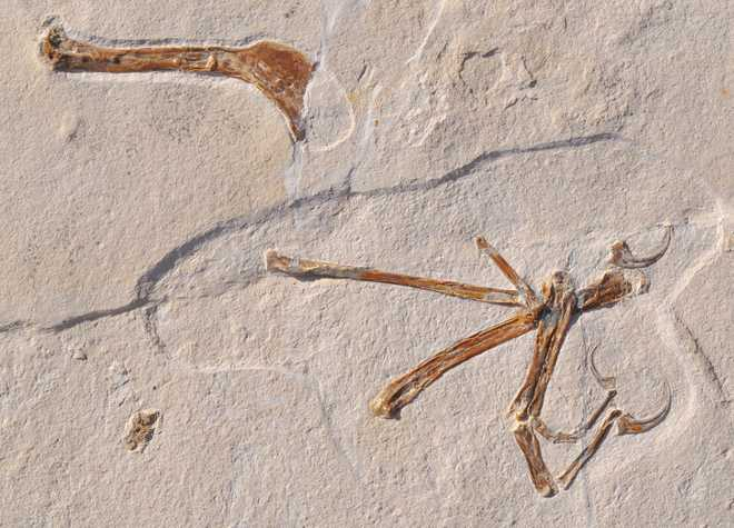 Scientists unearth 'most bird-like' dinosaur ever found