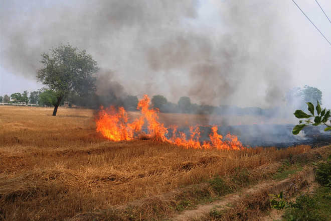 Over 600 stubble-burning cases reported from dist