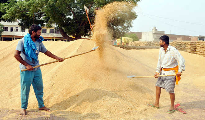 6.52L-MT wheat purchased as procurement process ends
