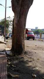 Shoddy road carpeting stifles trees