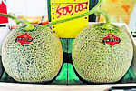 Two melons auctioned for record $45,600 in Japan