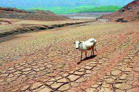 Worst drought in 40 yrs, Maha runs out of fodder