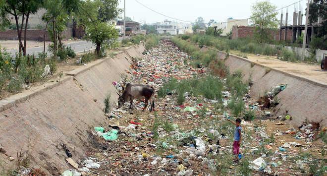 Bist Doab Canal irrigates mere 4 per cent paddy area  in Jalandhar