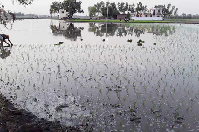 Farmers defy govt order, begin paddy sowing