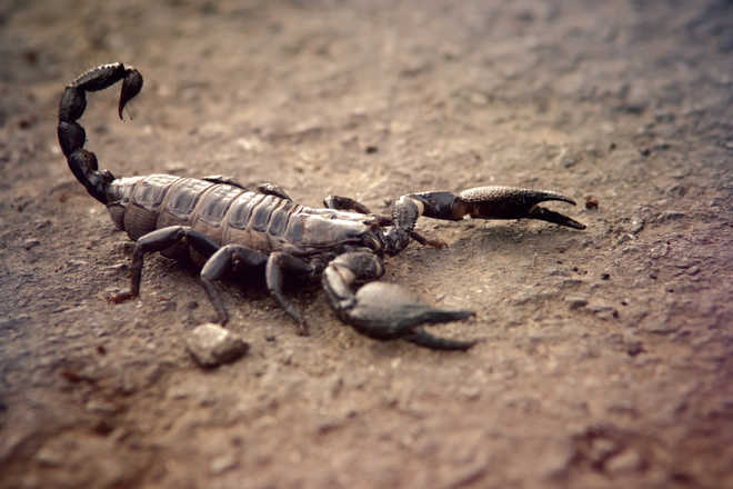 Compounds from scorpion venom may help treat bacterial infections