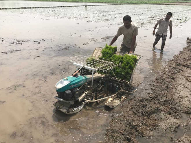 Paddy farmers skeptical about mechanised transplantation