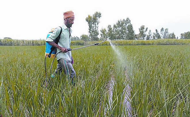Agri Dept asks farmers not to buy pesticides directly from suppliers