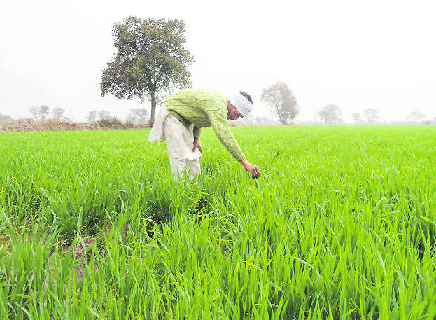 A first: State saves Rs120-crore on crop insurance scheme