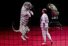 An artist with tigers performs during the presentation of the new show 'Parade Ole-Ole-Ole!' at the Belarus State Circus in Minsk, Belarus June 14, 2019. — Reuters