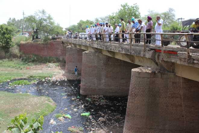 Polluted Ghaggar bane of Sangrur