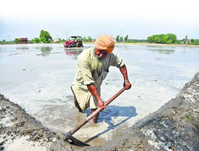 Why Punjab has a water crisis, and what now