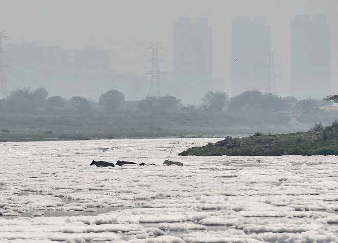 Dept repairs  8 studs along Yamuna river
