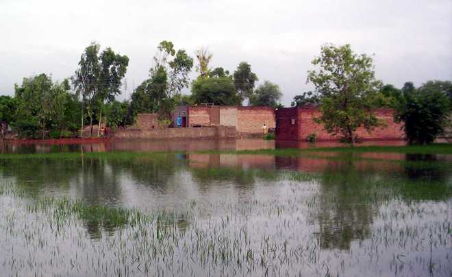 Paddy crop on hundreds of acres submerged in Moga villages