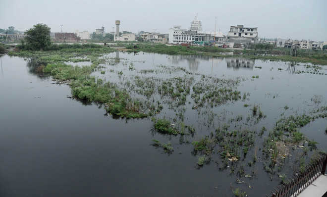 Acres turn sewage pond in Surya Enclave