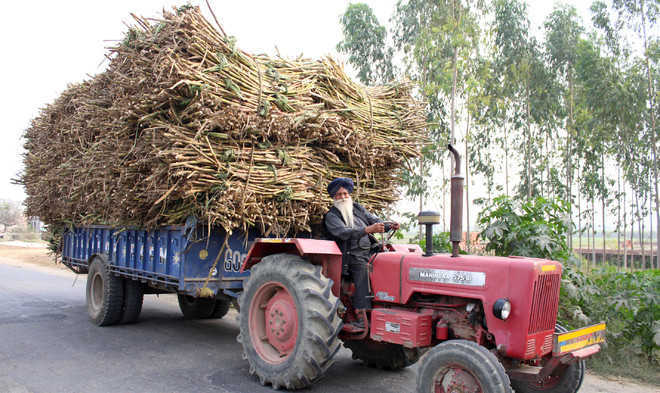 Cane Farmers Serve Ultimatum Want Issue Resolved By August 22