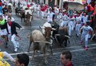 Participants run next to Nunez del Cuvillo fighting bulls and steers on the sixth bullrun of the San Fermin festival in Pamplona, northern Spain on July 12, 2019. — AFP